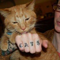 Татуировки с кошками фото приколы
