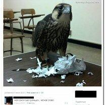 Смешные комментарии и смс-диалоги смешных фото приколов