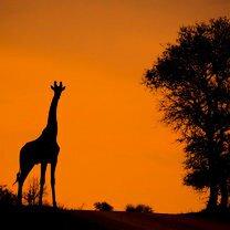 Фото приколы Виды тропической природы (23 фото)