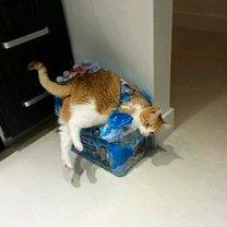 Спаси кошку! смешных фото приколов