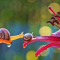 Фото приколы Природа при близком рассмотрении (22 фото)