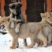 Дружба в мире зверей