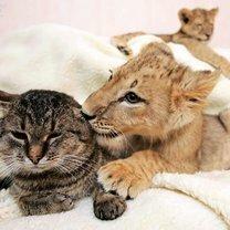 Фото приколы Дружба в мире зверей (20 фото)
