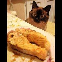 Комнатные звери против еды смешных фото приколов