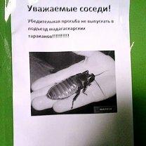 Фото приколы Тараканы могут заболеть раком! (55 фото)