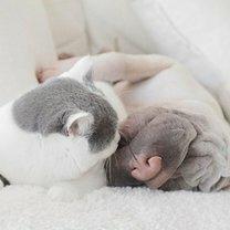 Дружба кота и собаки