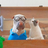 Фото приколы Дружба кота и собаки (18 фото)