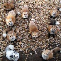 Деревня лис смешных фото приколов