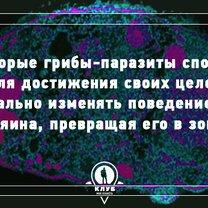 Фото приколы Познавательно о грибах (10 фото)