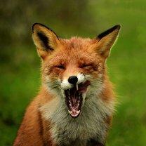 Смешные и чудные зверушки смешных фото приколов