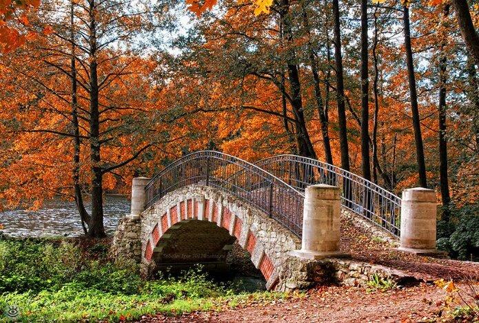 Осенняя волшебная пора 3