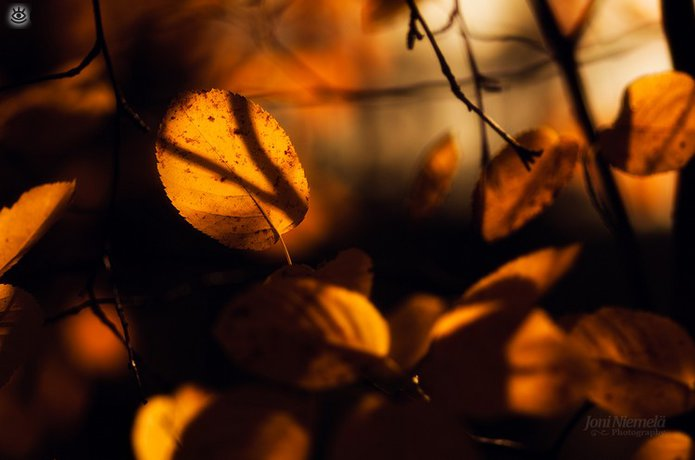 Осенняя волшебная пора 10