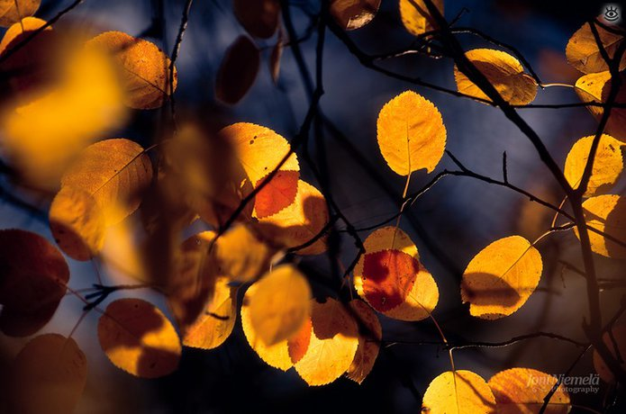 Осенняя волшебная пора 12