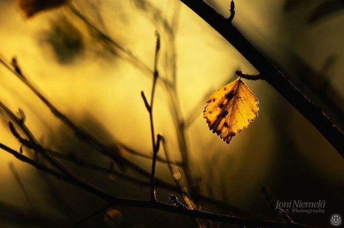 Осенняя волшебная пора 13