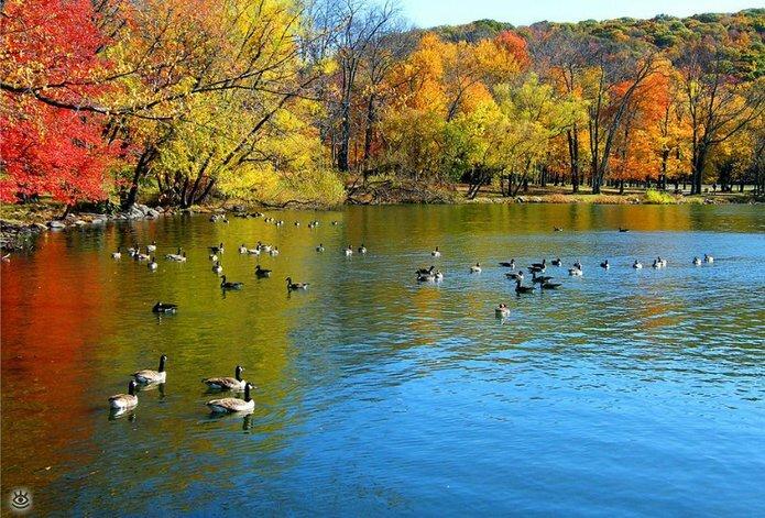 Осенняя волшебная пора 14