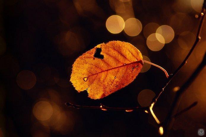 Осенняя волшебная пора 15