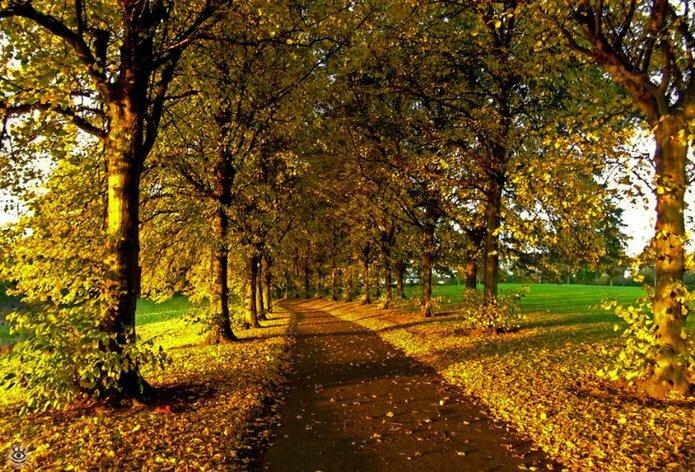 Осенняя волшебная пора 17