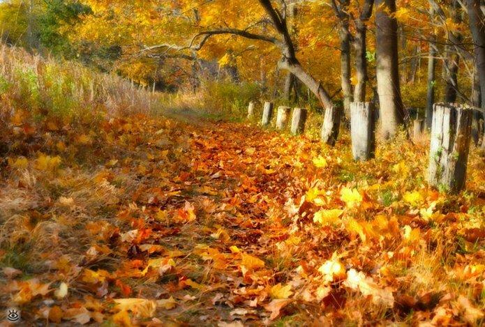Осенняя волшебная пора 25