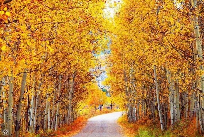 Осенняя волшебная пора 26