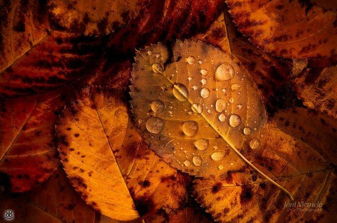 Осенняя волшебная пора 27