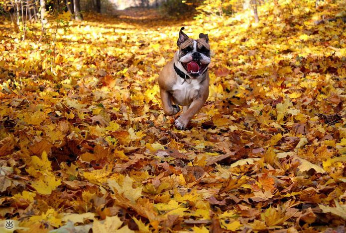 Осенняя волшебная пора 30