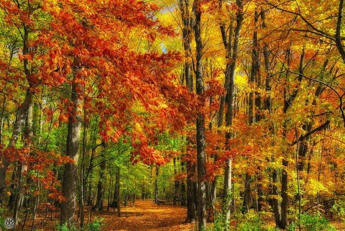 Осенняя волшебная пора 32