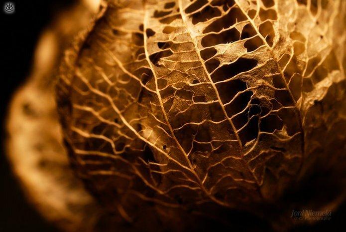 Осенняя волшебная пора 38