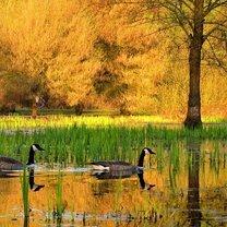 Осенняя волшебная пора фото