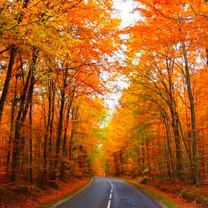 Фото приколы Осенняя волшебная пора (43 фото)