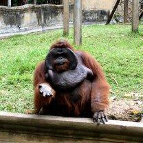 Фото приколы Забавные предупреждения из зоопарков (26 фото)
