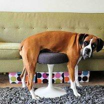 Казусные фото с собаками