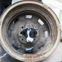 Фото приколы Казусные фото с собаками (26 фото)