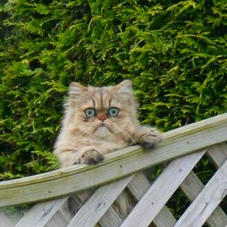 Кошки и коты в нелепых и смешных ситуациях