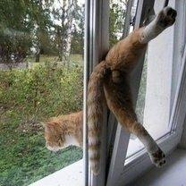 Фото приколы Кошки и коты в нелепых и смешных ситуациях (39 фото)