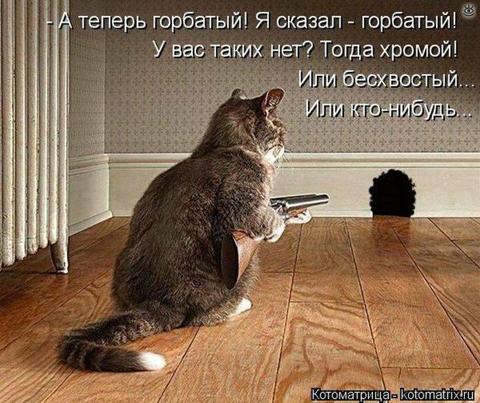 Жизненные истории про котов 0