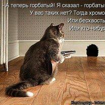 Жизненные истории про котов
