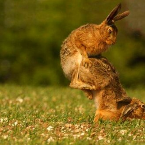 Настройся на позитив! смешных фото приколов