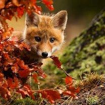 Фото приколы Осеннее настроение от зверушек (14 фото)