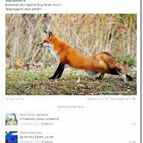 Комментарии-нелепости и комментарии-смешилки фото приколы