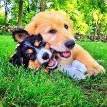 Трогательные и забавные щенята