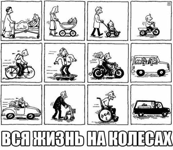 Курьёзы с дорог и с колёс 36