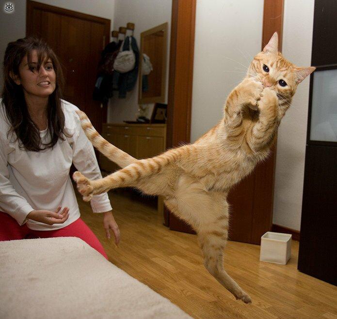 Коты, которых не берёт сила притяжения 1