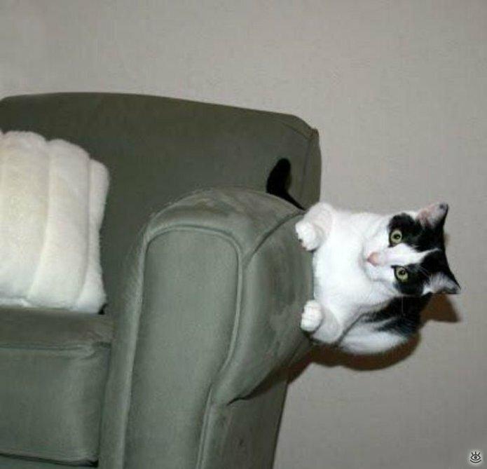 Коты, которых не берёт сила притяжения 2