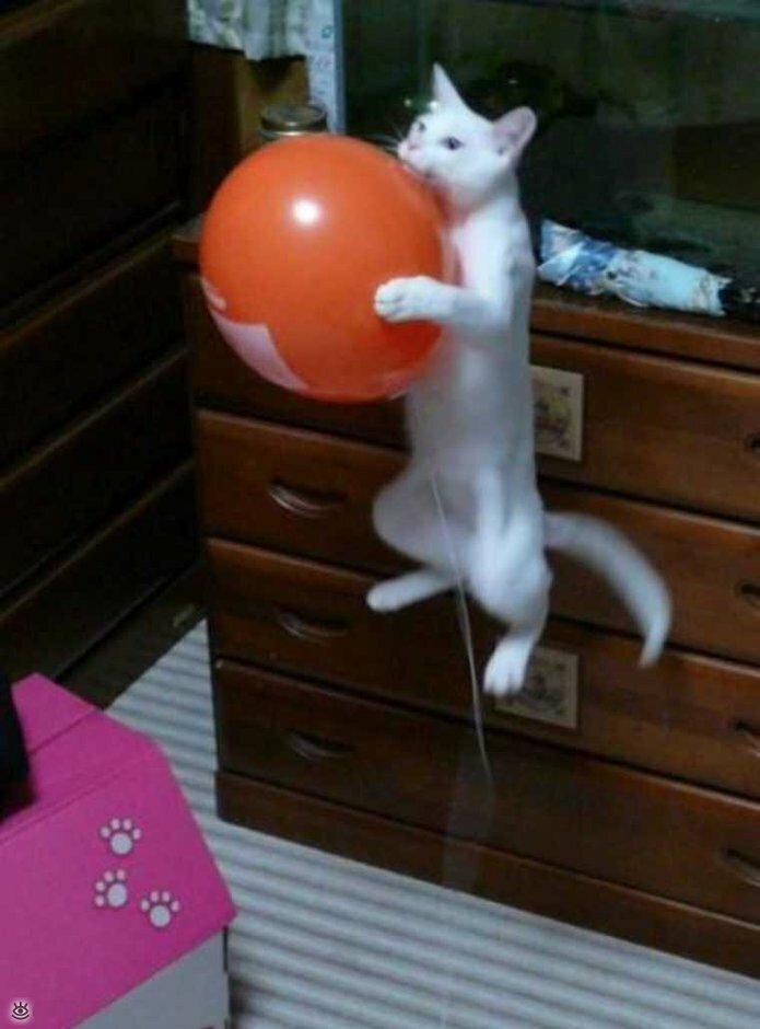 Коты, которых не берёт сила притяжения 5
