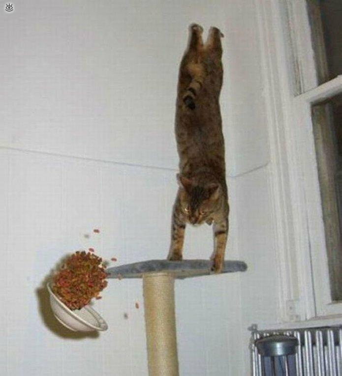 Коты, которых не берёт сила притяжения 6