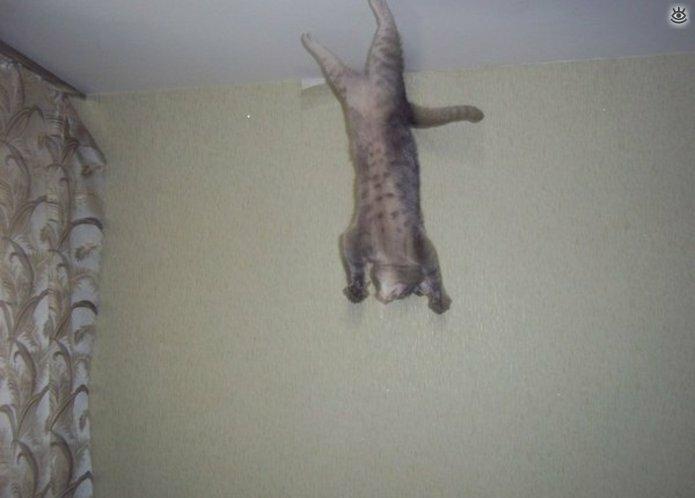 Коты, которых не берёт сила притяжения 7