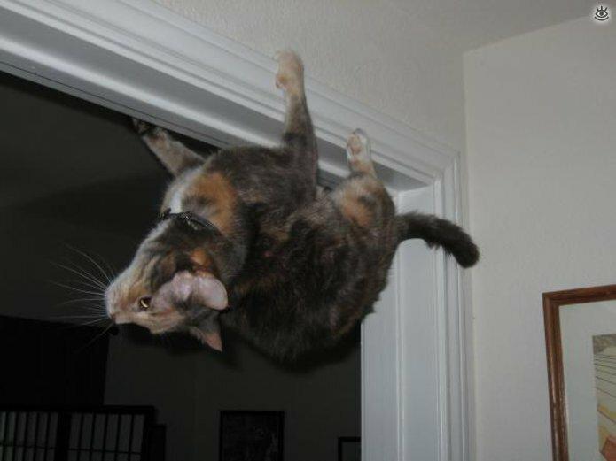 Коты, которых не берёт сила притяжения 8