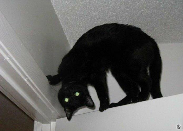 Коты, которых не берёт сила притяжения 9