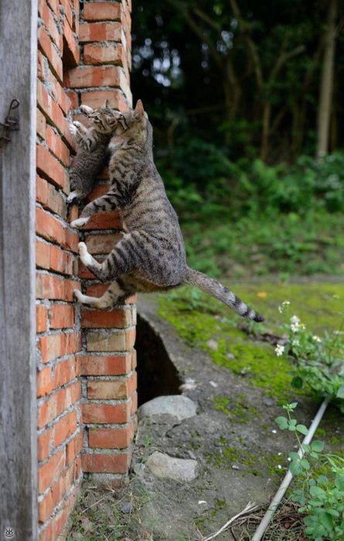 Коты, которых не берёт сила притяжения 10