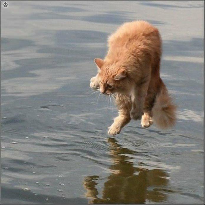 Коты, которых не берёт сила притяжения 11
